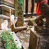 神社のヌシ撮り