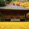 富貴寺大堂の紅葉