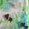 金魚と水草 奮闘4
