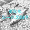 【淀川】今日もシーバス狙い。【大潮】