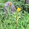 夏の花便り、思い込みを払拭して。
