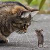 猫の寿命が伸びる!?腎臓病が克服できる可能性が!