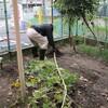 菜園プロジェクト 冬の野菜の種まきをしました