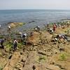 【記録】2012年第3回定点調査 長崎海岸