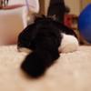 今日の黒猫モモ&白黒猫ナナの動画ー694