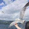 海猫とブランコとエクシブ初島と