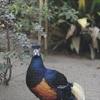【上野動物園】手前のアスレチックで遊びたおし、園内でも大変なことに