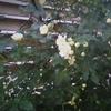 平成最後という事で庭に出て花を撮ってみた