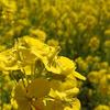 黄色の花たち^^