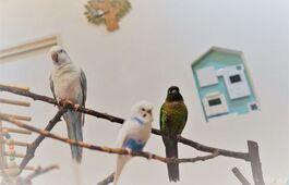 注文住宅がかなえた、夫妻と小鳥たちの心地よい暮らし