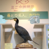 相模川ふれあい科学館のミニ企画展示「魚とり名人、カワウ」開催中!