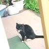 実家に遊びに来る近所の猫が可愛い☆