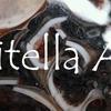 タリテラ・アゲート:Turritella Agate