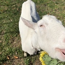 vegan-support-BiNatureenの日記