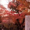 京都 紅葉 人力車