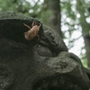 罰当たりの蝉(狛犬で羽化した蝉がいた)武蔵野八幡宮境内にて