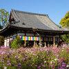 コスモス寺・般若寺と奈良きたまち、奈良公園の紅葉散策