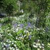 白とブルーの初夏の「まつこの庭」