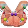 2分で面白いほど理解できる科学(4):人間の中に潜むアミノ酸の面白い話
