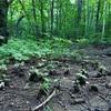 大雨の後の森で見つけた生命力