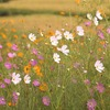 畦道のお花畑