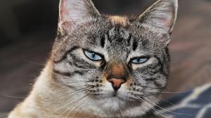 もっと美猫に!猫ちゃんのお手入れと健康に関する英語表現