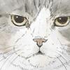 【イラスト】猫:どんぐりちゃん