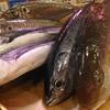 本日の漁港直送の魚たち!【第1便】高知・須崎から\(^o^)/