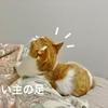 新しく迎えた猫さんとるるちゃんが仲良くなりすぎて、飼い主が置いてきぼりにされる夢を見ました(涙)