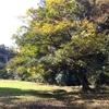 鎌倉ならではの季節感