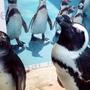 池袋の夜デートに困ったら超オススメ!「ペンギンBAR」が良かったのでサクッとレビューを書く