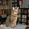 猫と本棚(ミーよ、やすらかに)