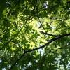 新緑が輝くこどもの日。