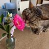 暮らしに欠かせない2種類のサブスク|お花の定期便と電動歯ブラシに助けられています