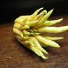 仏手柑 ブッシュカン Citrus medica var. sarcodactylus