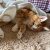 猫の介護は慎重に・・・今日も点滴!経過観察していく毎日