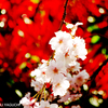 お花さん、ありがとう^^☆