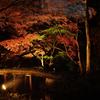 【六義園】にて紅葉と大名庭園のライトアップが楽しめます(文京区)