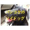バンコクのソイドッグ(soi dog in Bangkok)路上生活