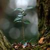 林の中の暗さを利用しローキーで小さい木を