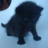 今日の黒猫モモさんの動画ー479