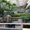 【クアラルンプール生活】花屋を探す