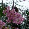 桜とメジロ 02/17