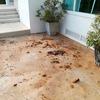 久しぶりの雨&強風で朝からお掃除タイム。あと猫写真