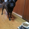 甲斐犬サンの頑固なトコ〜オチリ冷エルンダョゥッ(● ˃̶͈̀ロ˂̶͈́)੭ꠥ⁾⁾