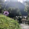 本気で移住したいスイスの魅力③スイスの大絶景と給料事情