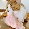 ふみふみふみ…ゴツン!ふみふみしながら飼い主に頭突きしてくる愛猫。