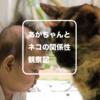 赤ちゃんと猫 | 生後一ヶ月から半年の間の両者の距離と関係性