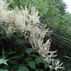 山野草図鑑 秋冬 白色の花