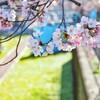 卒業、春、桜